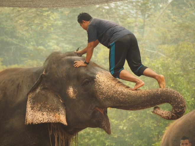 The special partnership between men and elephant on show